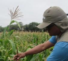OEFA detecta los primeros campos de cultivo en el Perú con Organismos Vivos Modificados (OVM) e impone medidas administrativas
